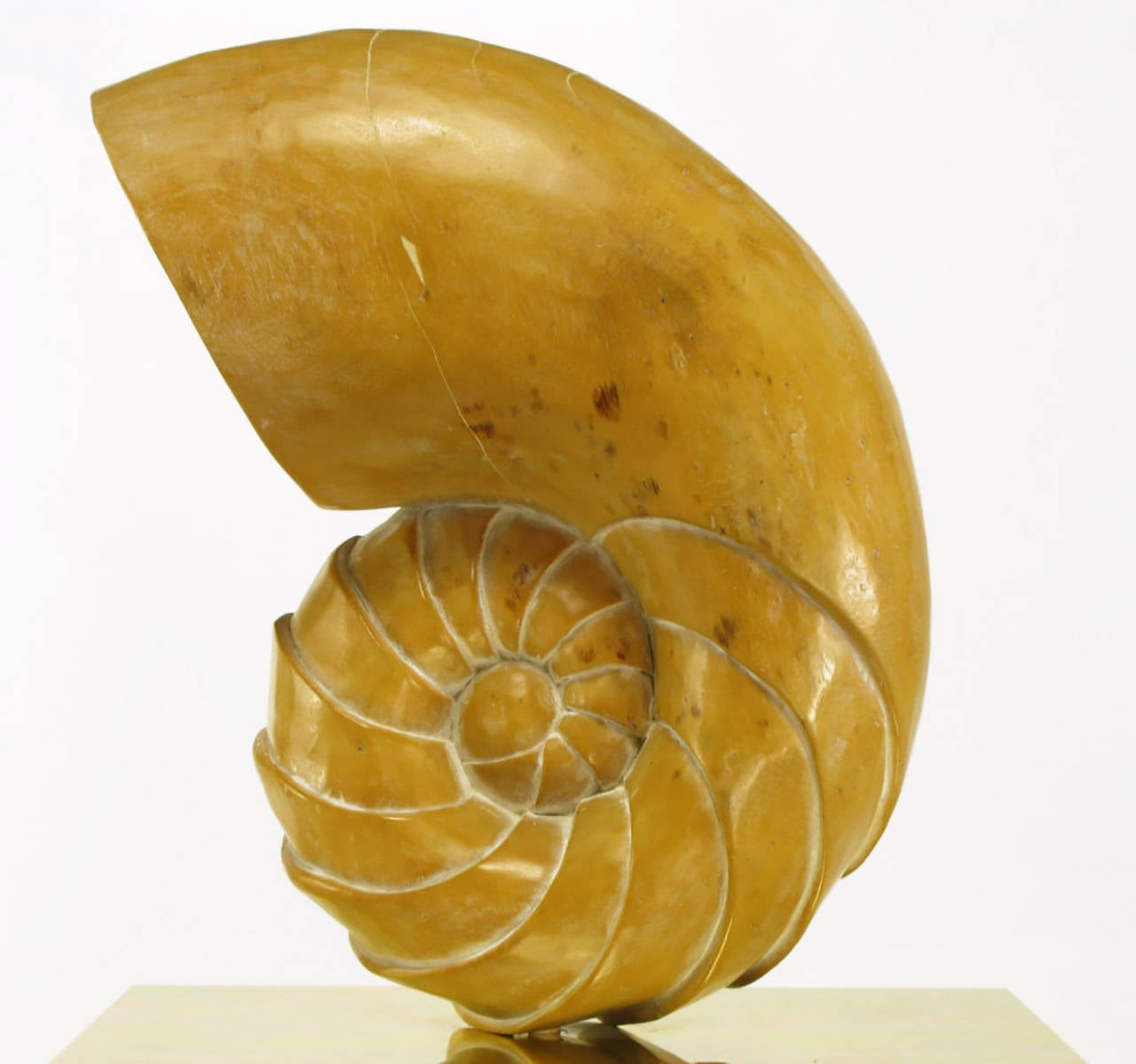 Carved Wood Ammonite Shell Sculpture on Brass Pedestal For Sale 2