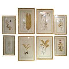 Set of 8 Hand-Colored Botanical Etchings