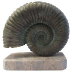 Bronze Ammonite on Marble Base