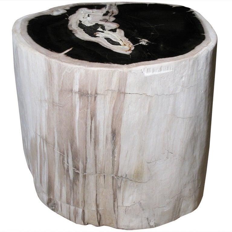 A Petrified Wood Trunk Table 1