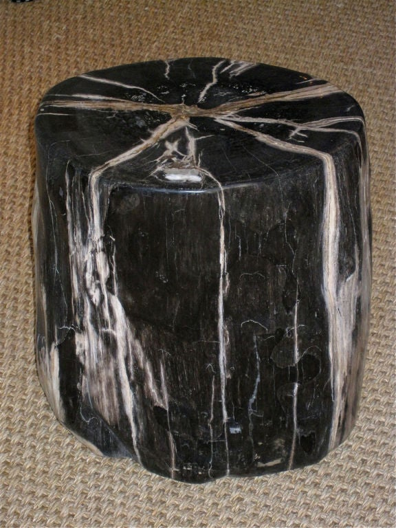 20-200 Million Years Old<br /> A highly polished organic petrified wood trunk section. Can be used as a coffee table, stool or side table. Oval shaped trunk is dark charcoal in color with grey and taupe veins.<br /> (Measurements taken at widest