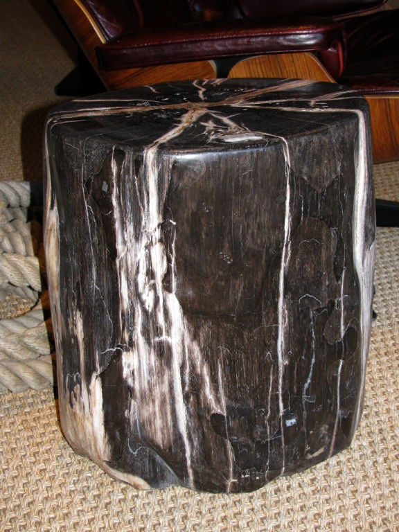 18th Century and Earlier A Petrified Wood Trunk Table