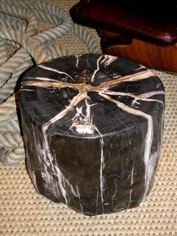 A Petrified Wood Trunk Table 2