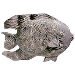 Medium Angel Fish