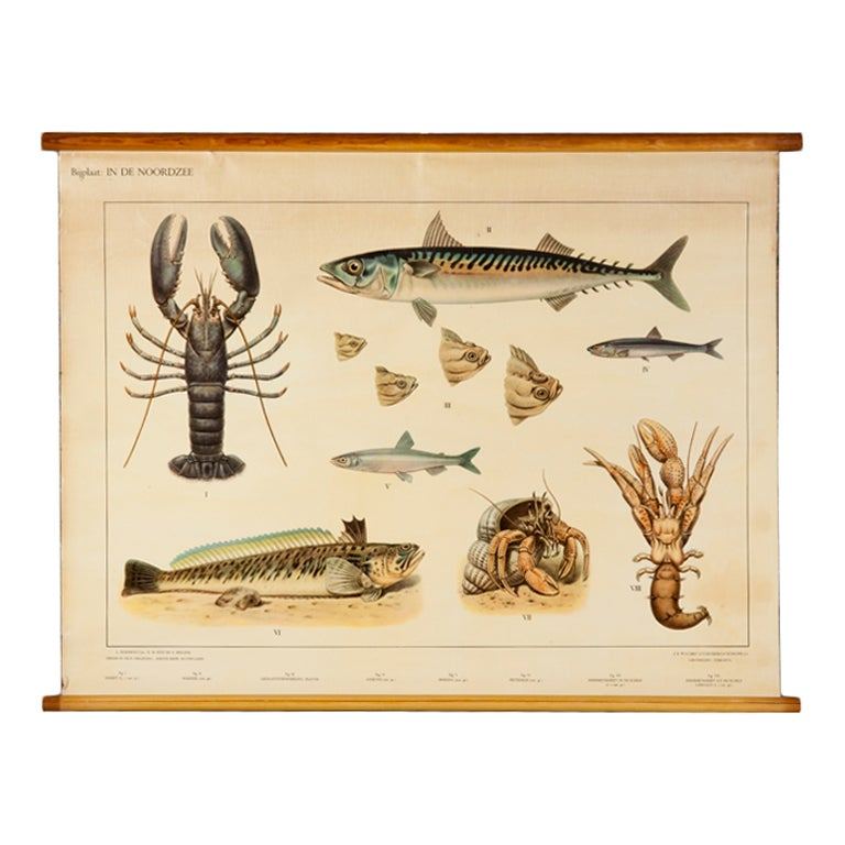 Flemish School Chart Of Sea Life From The North Sea At 1stdibs