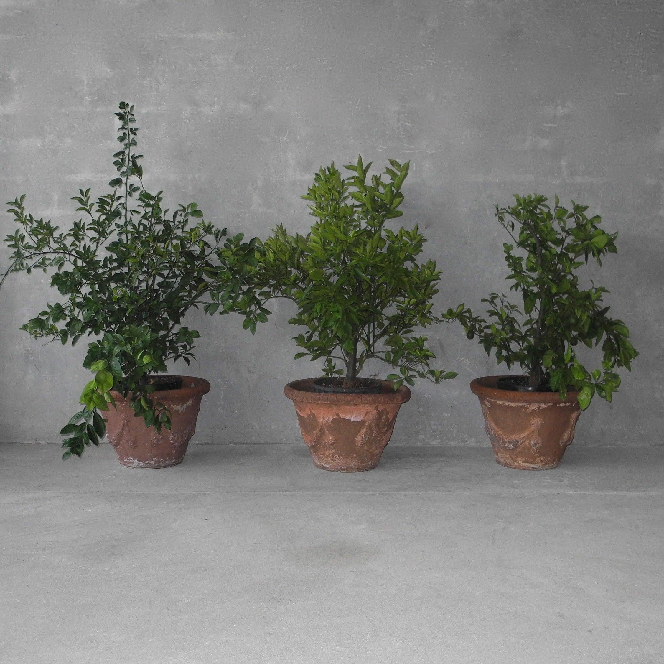 Set of 3 Italian Terracotta Planters