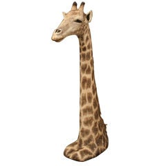 A large floor standing head and shoulders of a Giraffe