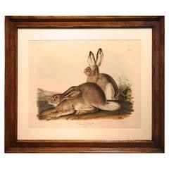 Lithograph After John James Audubon, Rocky Mountain Hare Pl. III
