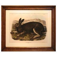 Lithograph after John James Audubon, Polar Hare (PL.XXXII), 1844