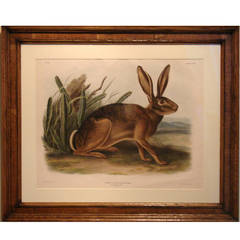 John Woodhouse Audubon, California Hare 'Pl. CXII', 1847
