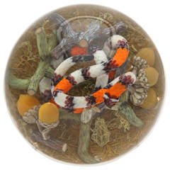 Gordon Smith Cobra Coral Snake Paperweight
