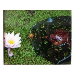 """Frog in a Pond"" by Oberto Gili"