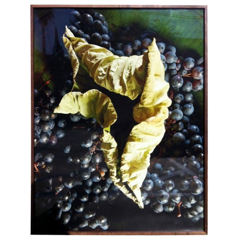 """Grapes"" Photograph by Oberto Gili"