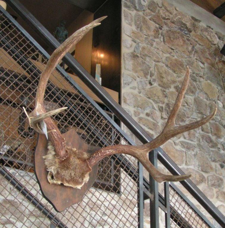 Mounted Deer Antlers At 1stdibs