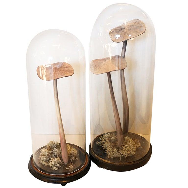 Domed Mushroom Medium