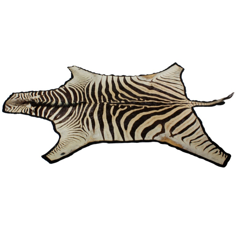 Zebra Hide Rug, With A Fabulous Coat At 1stdibs