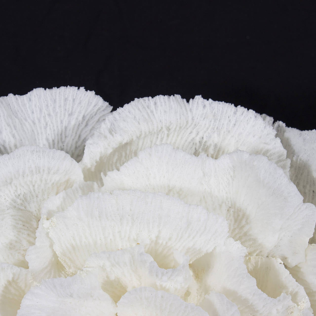 White merulina coral centerpiece at stdibs