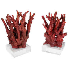 Two Chinese Bamboo Red Coral Trees
