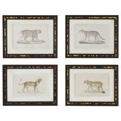 Set of Four Exotic Big Cat Prints in Faux Tortoise Frames