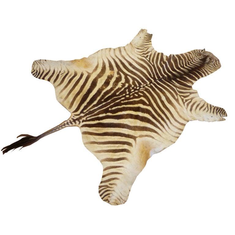 Zebra Rug At 1stdibs