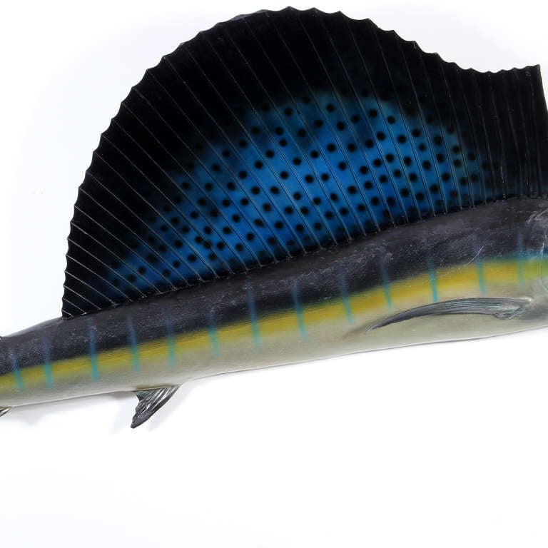 Taxidermy Sailfish  In Excellent Condition For Sale In Palm Beach, FL
