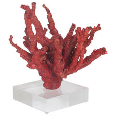 Impressive Red Bamboo Coral on Lucite