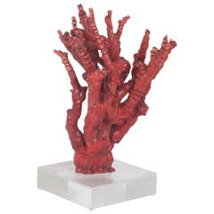 Tall Impressive Red Bamboo Coral on Lucite