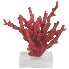 Red Bamboo Coral on Lucite