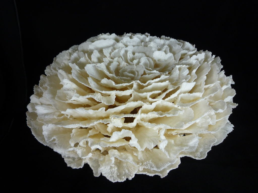 Large white merulina coral centerpiece at stdibs