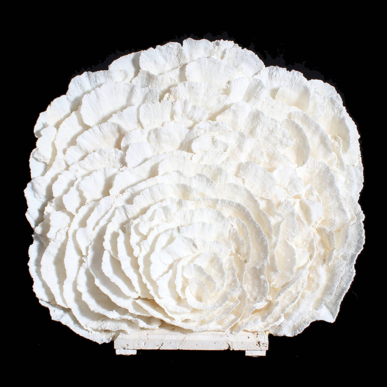 Large white merulina coral sculpture or centerpiece at stdibs