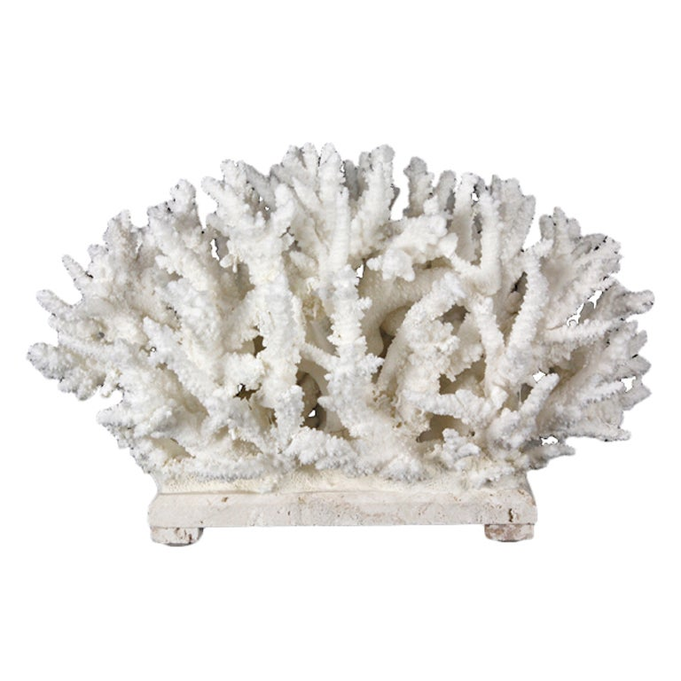 Branch coral low centerpiece at stdibs