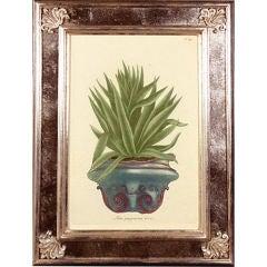 A Set of Twelve Framed Engravings of Flowers in Pots