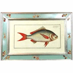 Four Engraving of Fish by Marcus Bloch