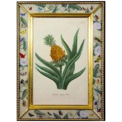 Four Weinmann Botanical Prints of Pineapples