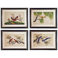 Fine Set of Four China Trade Watercolours of Birds on Pith Paper