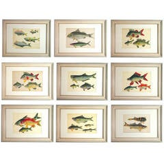 Chinese Watercolours of Fish in a set of nine on Pith Paper