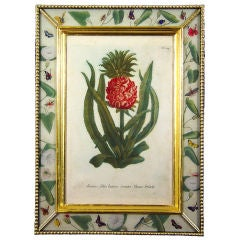 A Set of Four Weinmann Botanical Prints of Pineapples.