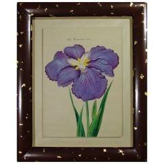 A Set of Twelve Framed Japanese Watercolour Paintings of Irises