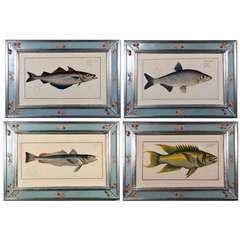 A Set of Four Hand-Colored Copperplate Engraving of Fish