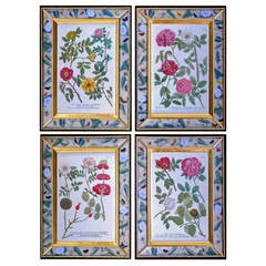 Rare Set of Four Johann Weinmann Engravings of Roses