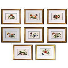 Chinese Watercolours of Flowers and Butterflies on Pith Paper, Set of eight.
