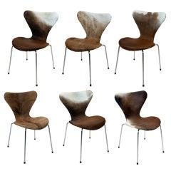 Fantastic Set of Six Arne Jacobsen Bullskin 'Series 7' Chairs