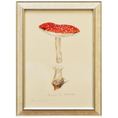 Botanical Works of Mushrooms by Artist Anna Chiara Branca