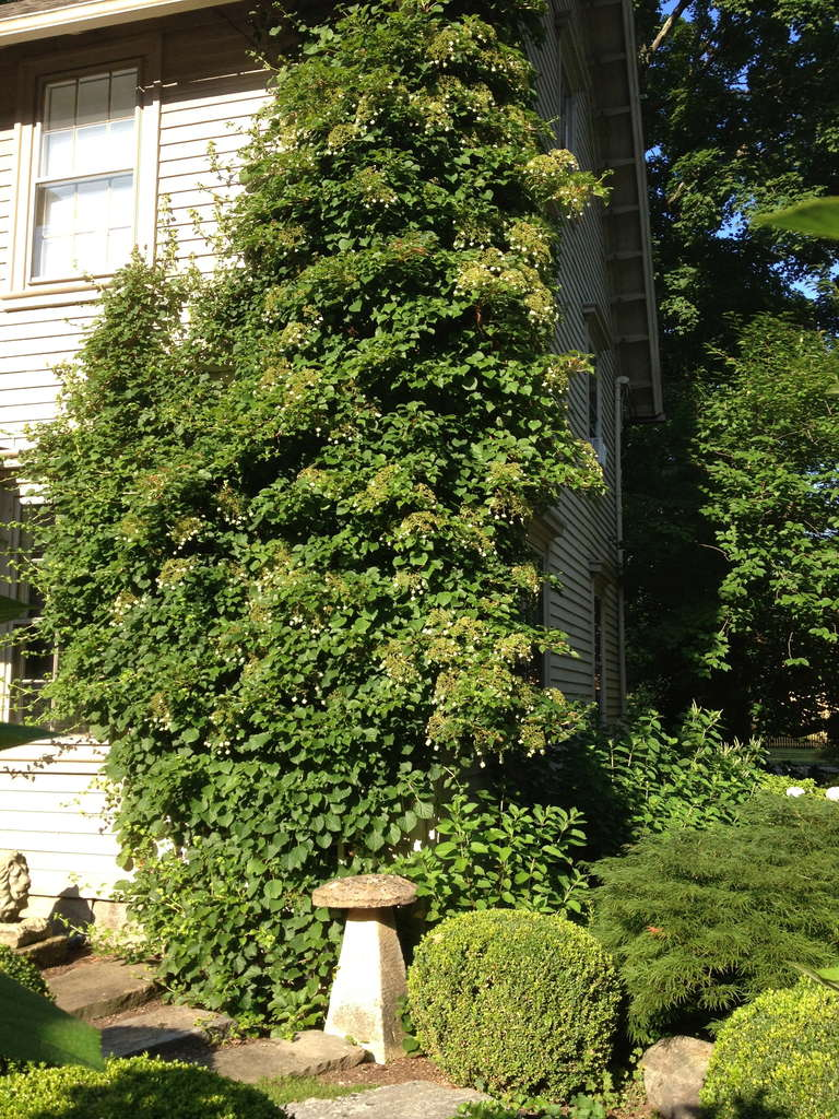 Large Wooden Garden Trellis For Sale 3