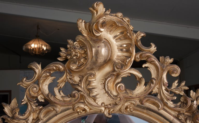 French Louis XV Rococo style gilt wood mirror of elegant serpentine shape with arched top frame mounted by a pierced and carved acanthus shaped cartouche surrounding the original hand cut beveled mercury mirror