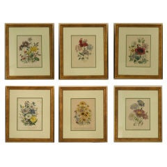 English c1849 Loden Botanical Lithographs, Set of 6