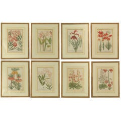 Johann Weinmann Botanical Prints, Set of 8