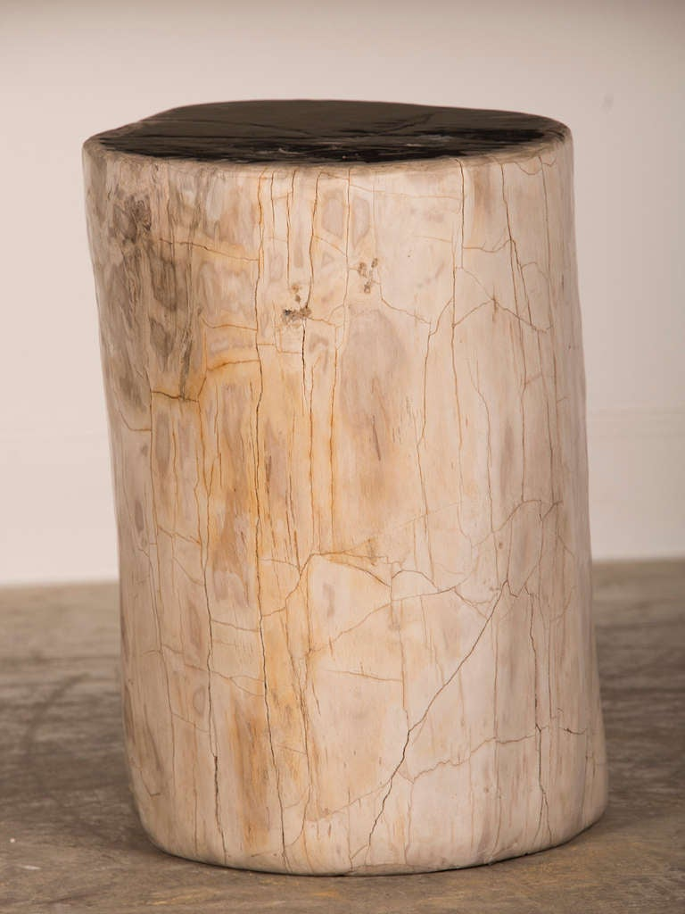 Petrified wood tree trunk side table from indonesia at stdibs