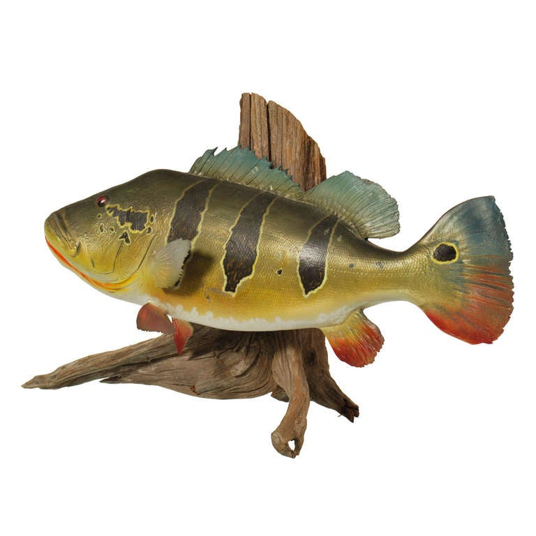 Large peacock bass fish mount with driftwood for sale at for Bass fish for sale