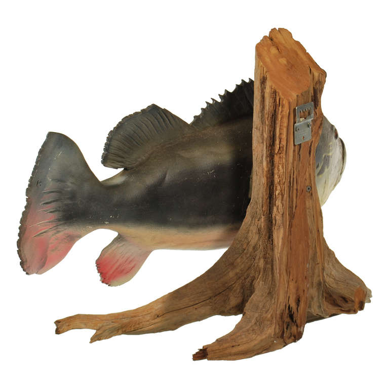Large Peacock Bass Fish Mount With Driftwood At 1stdibs